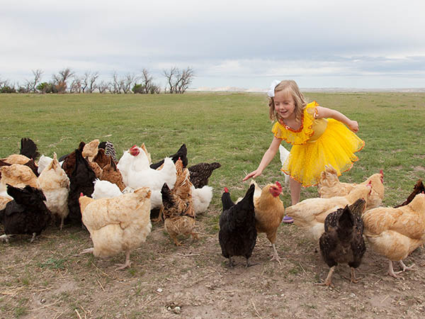 Little girl in yellow dress playing with chickens