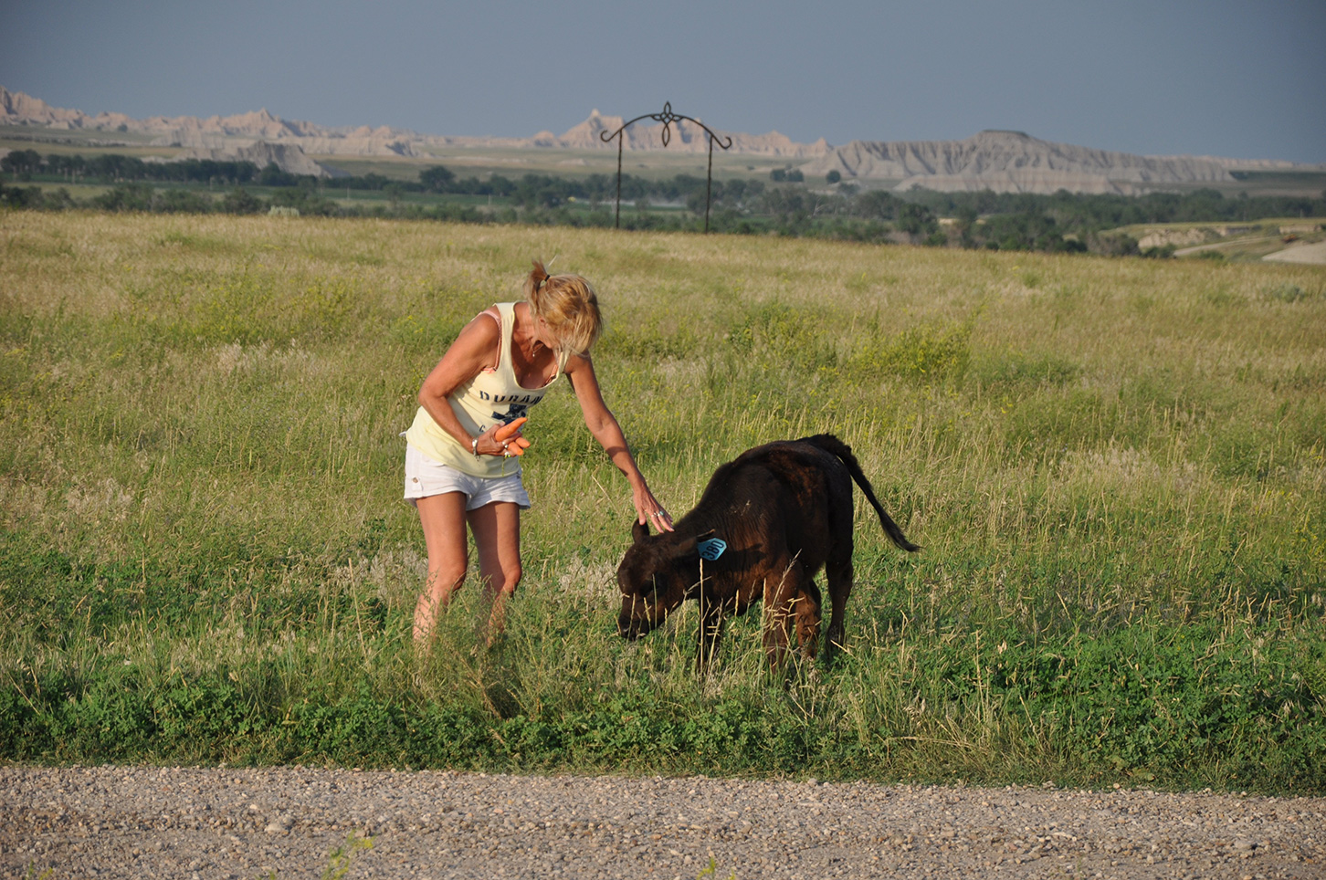 Woman petting a small calf in the grass