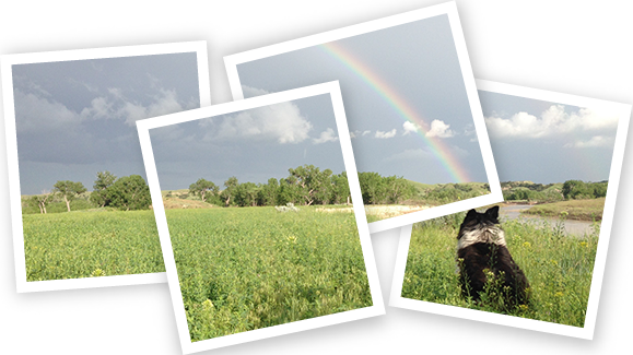 Image of a dog in thegrass looking at a rainbow